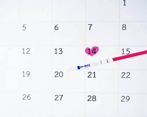 Ovulatie; Wat zijn je vruchtbare dagen?