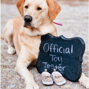 Zwangerschapsaankondiging hond